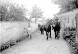 Bartůňkovi koně se vracejí z plavení